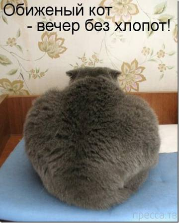 http://s3.uploads.ru/t/BgbRc.jpg