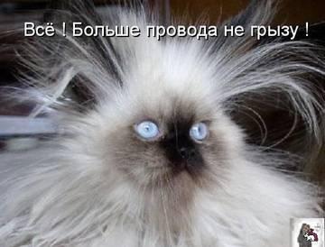 http://s3.uploads.ru/t/CgBf0.jpg