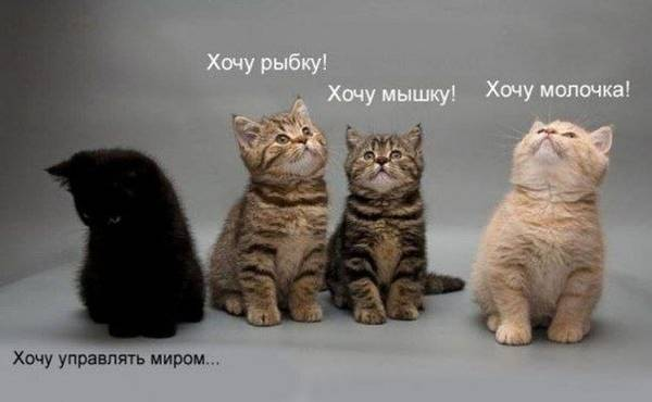 http://s3.uploads.ru/t/CjYMI.jpg