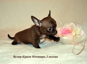 http://s3.uploads.ru/t/Cn7JE.jpg