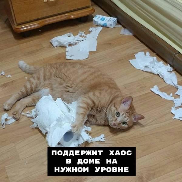 http://s3.uploads.ru/t/D1IR0.jpg