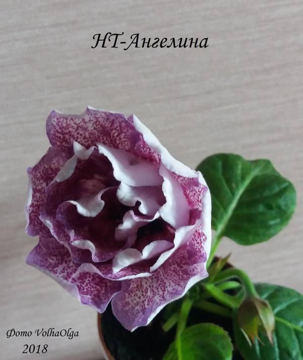 http://s3.uploads.ru/t/DRH96.jpg