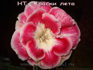 http://s3.uploads.ru/t/Du6e9.jpg