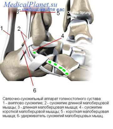 http://s3.uploads.ru/t/DyC7e.jpg