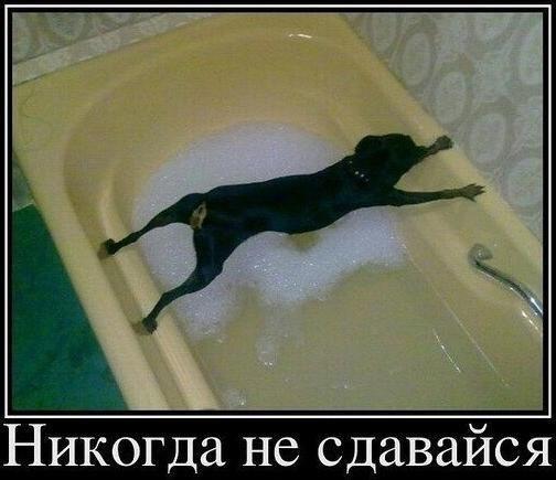 http://s3.uploads.ru/t/FHgIt.jpg