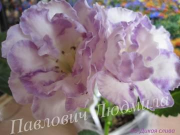 http://s3.uploads.ru/t/FL6Wv.jpg
