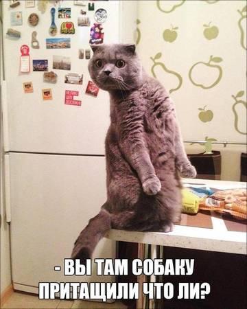 http://s3.uploads.ru/t/FM02t.jpg