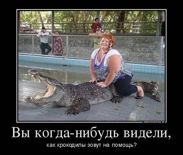 http://s3.uploads.ru/t/GHowT.jpg