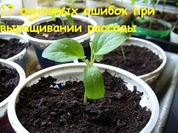http://s3.uploads.ru/t/GIgfr.jpg
