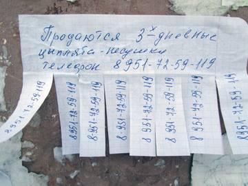 http://s3.uploads.ru/t/GsE5F.jpg