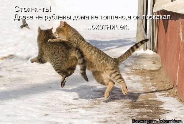 http://s3.uploads.ru/t/HKMDU.jpg