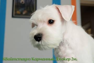 http://s3.uploads.ru/t/IQopy.jpg