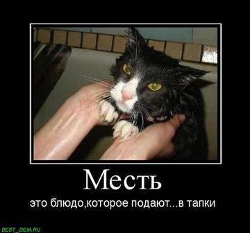 http://s3.uploads.ru/t/IhCY2.jpg