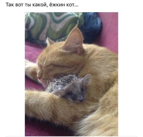 http://s3.uploads.ru/t/Ihu7p.jpg