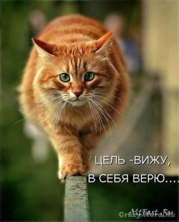 http://s3.uploads.ru/t/LG9iE.jpg