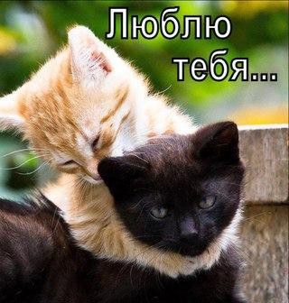 http://s3.uploads.ru/t/LkUJp.jpg
