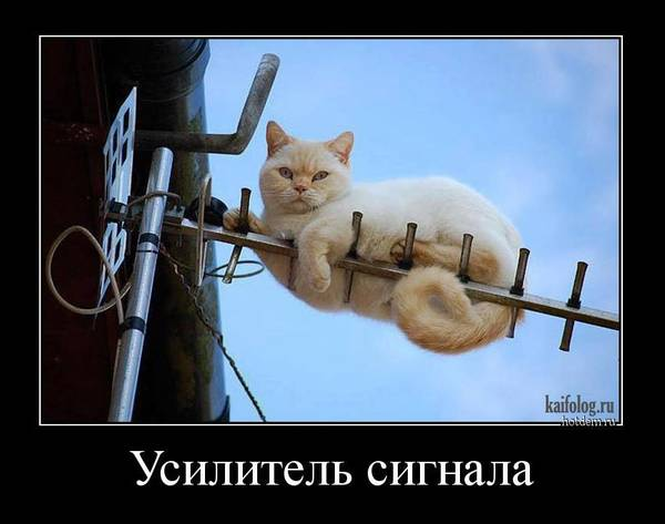 http://s3.uploads.ru/t/LqsJy.jpg