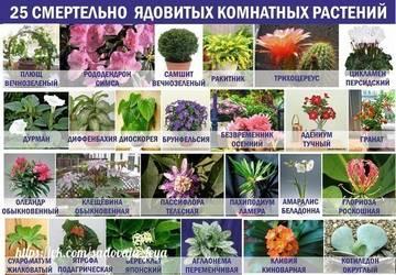http://s3.uploads.ru/t/M9NKg.jpg