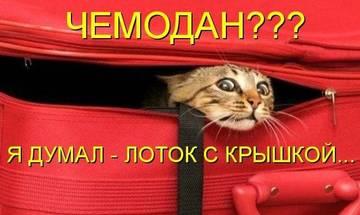 http://s3.uploads.ru/t/MY4Az.jpg