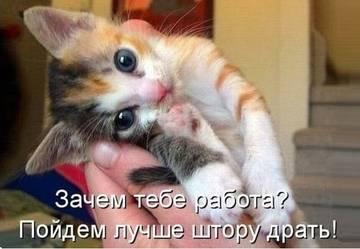 http://s3.uploads.ru/t/NFvGU.jpg