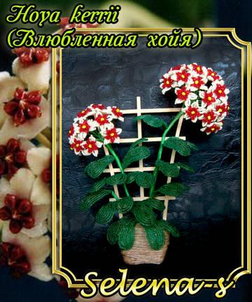 http://s3.uploads.ru/t/NKEfY.jpg
