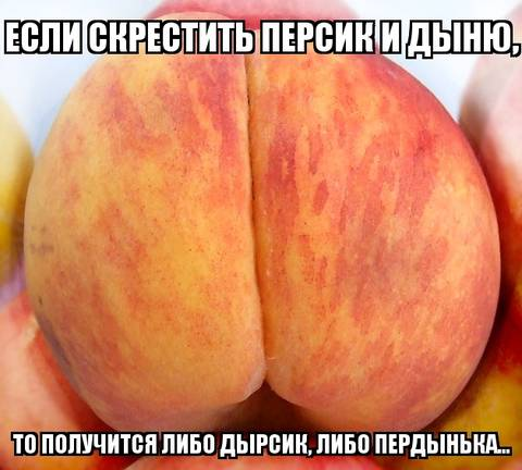http://s3.uploads.ru/t/Ndu8e.jpg