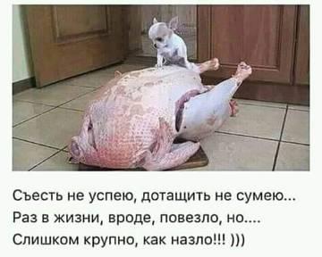 http://s3.uploads.ru/t/NtwTl.jpg
