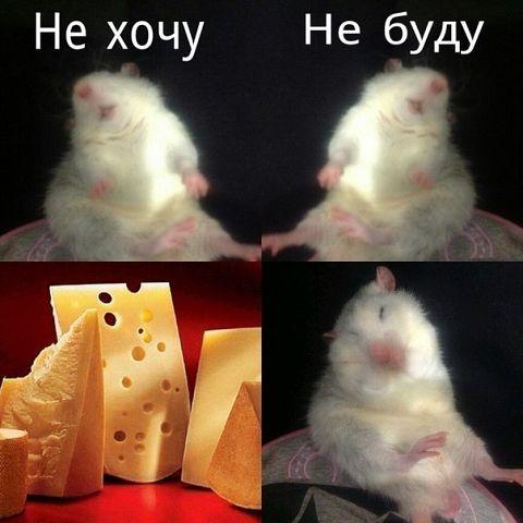 http://s3.uploads.ru/t/Nw0qu.jpg
