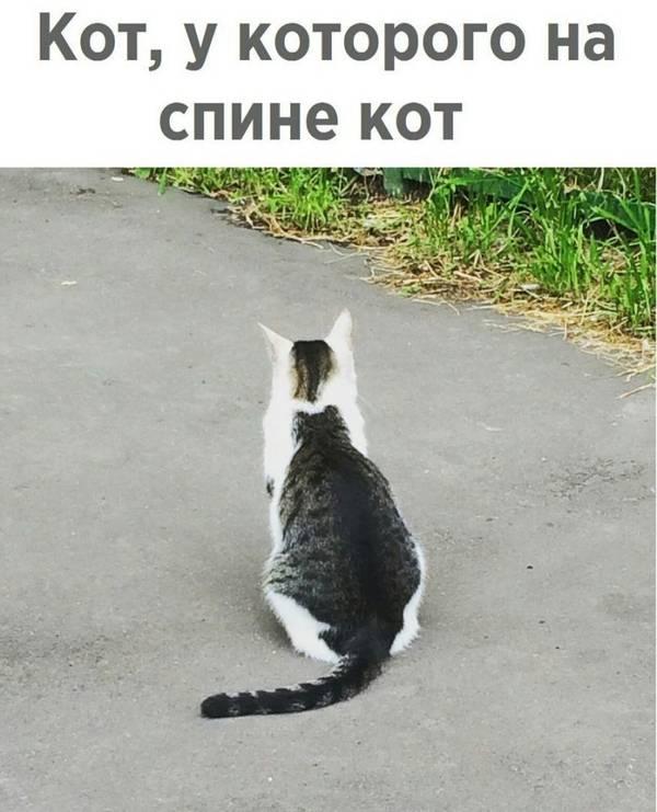 http://s3.uploads.ru/t/OySkX.jpg