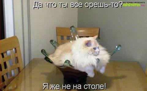 http://s3.uploads.ru/t/P4zB3.jpg
