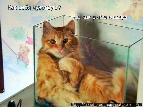 http://s3.uploads.ru/t/Q4y1v.jpg