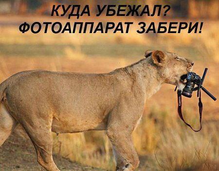 http://s3.uploads.ru/t/QJT1o.jpg