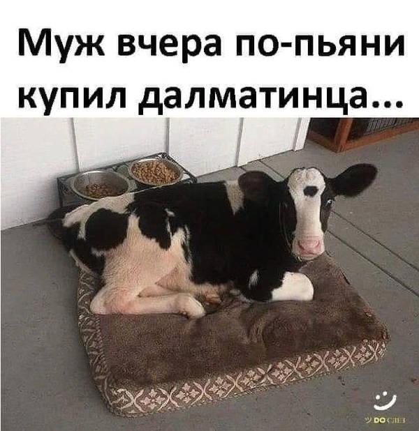 http://s3.uploads.ru/t/QeyDA.jpg