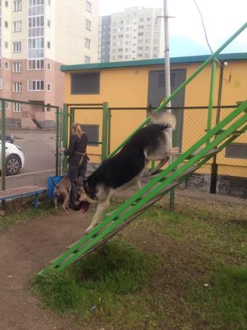 http://s3.uploads.ru/t/QyrJV.jpg