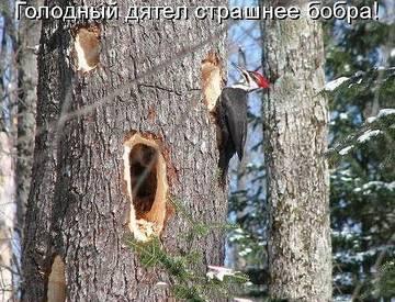 http://s3.uploads.ru/t/RGYD7.jpg