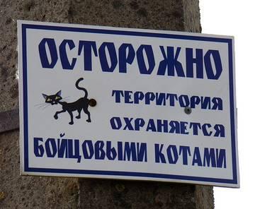http://s3.uploads.ru/t/RczVq.jpg