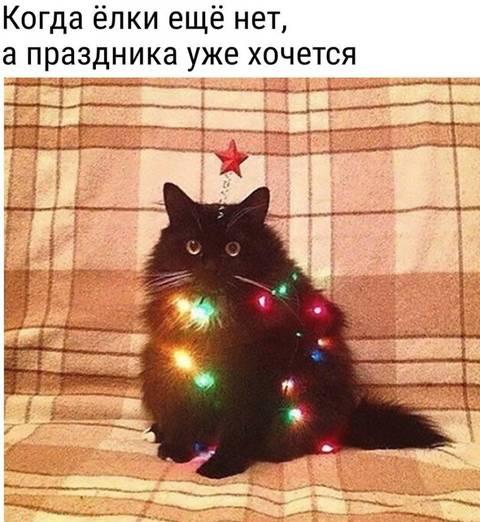 http://s3.uploads.ru/t/Rgwp1.jpg