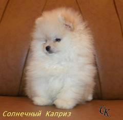 http://s3.uploads.ru/t/RsL8z.jpg