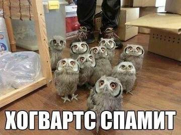 http://s3.uploads.ru/t/S54DQ.jpg