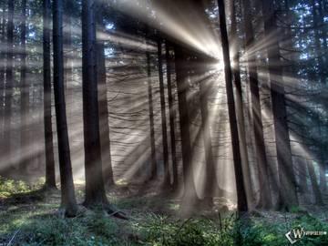 Таинственный сумеречный лес.