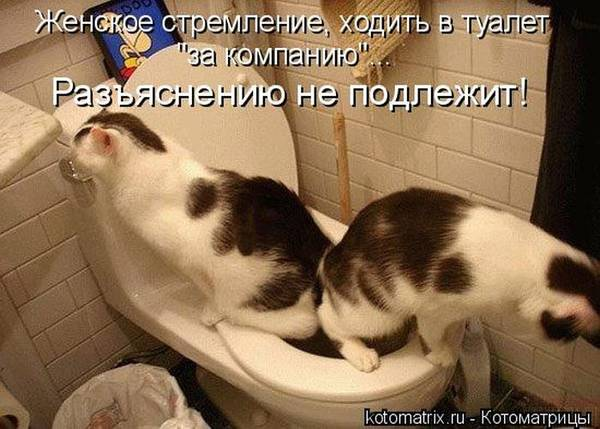 http://s3.uploads.ru/t/SlvUs.jpg