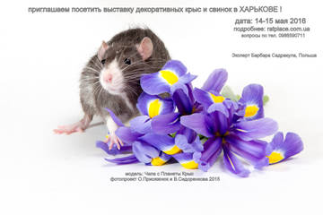http://s3.uploads.ru/t/Szu39.jpg