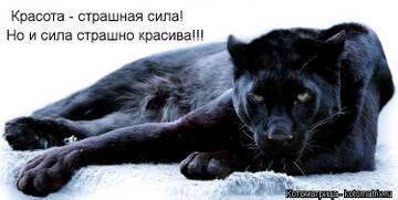 http://s3.uploads.ru/t/T3i9h.jpg