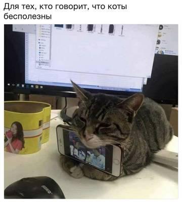 http://s3.uploads.ru/t/T7N3U.jpg