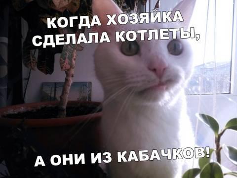 http://s3.uploads.ru/t/TIeBR.jpg
