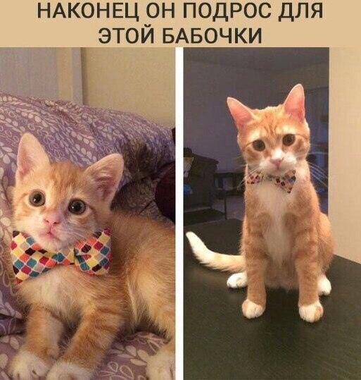http://s3.uploads.ru/t/TLF90.jpg