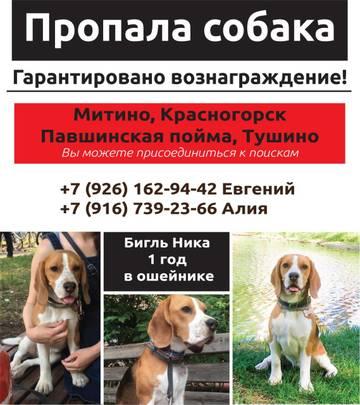 Помогите найти собаку