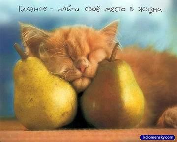 http://s3.uploads.ru/t/TjDGd.jpg