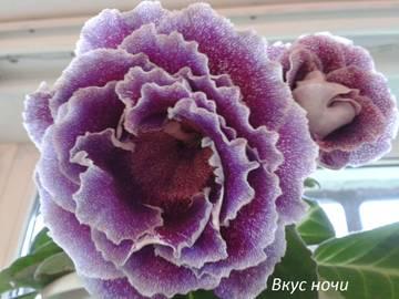 http://s3.uploads.ru/t/UxgOL.jpg