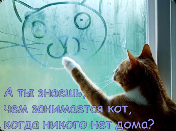http://s3.uploads.ru/t/UyMh3.png